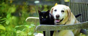 รักสัตว์เลี้ยง